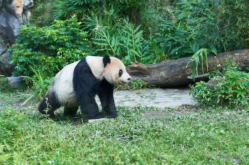 Photos gratuites de animal, faune, mammifère, nature