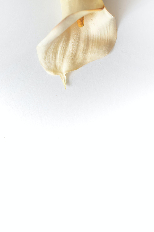 Foto d'estoc gratuïta de #lily #whitelily, #paulwencephotography