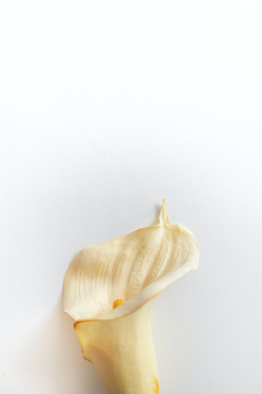 Foto d'estoc gratuïta de #lily, #paulwencephotography, #whitelily