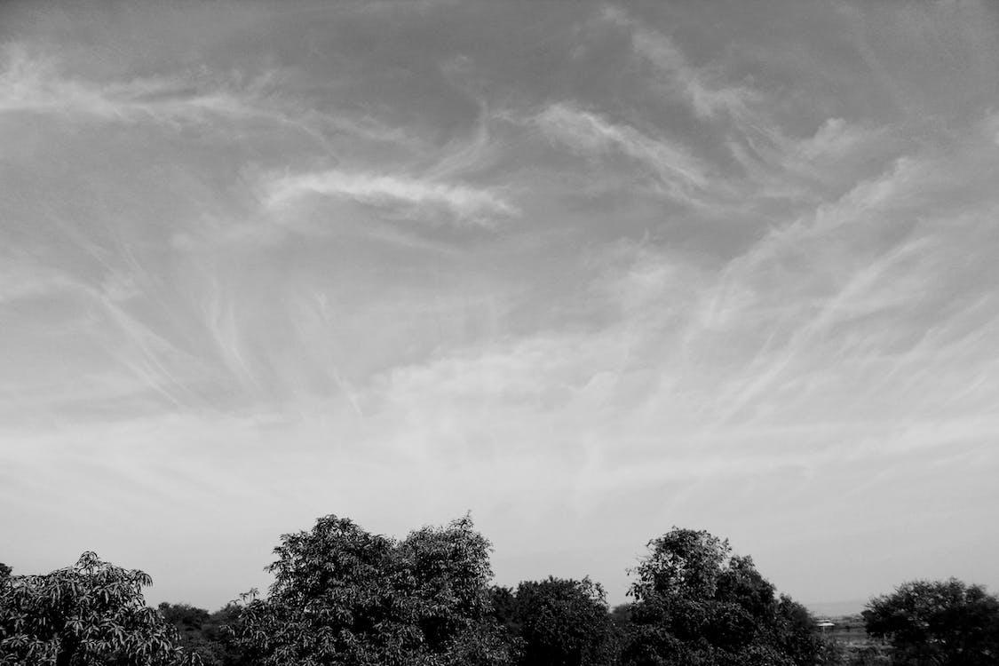 ağaçlar, gökyüzü, siyah ve beyaz