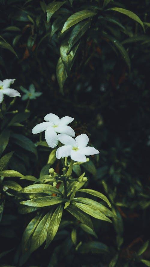 Ilmainen kuvapankkikuva tunnisteilla kauneus luonnossa, kukka, luonto