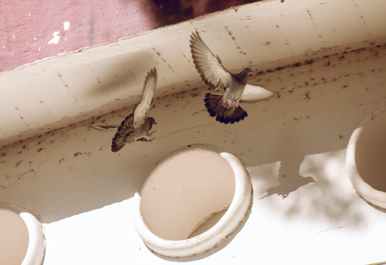 bird feeder, bird house, bird's eye view