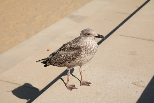 Free stock photo of bird, seagull