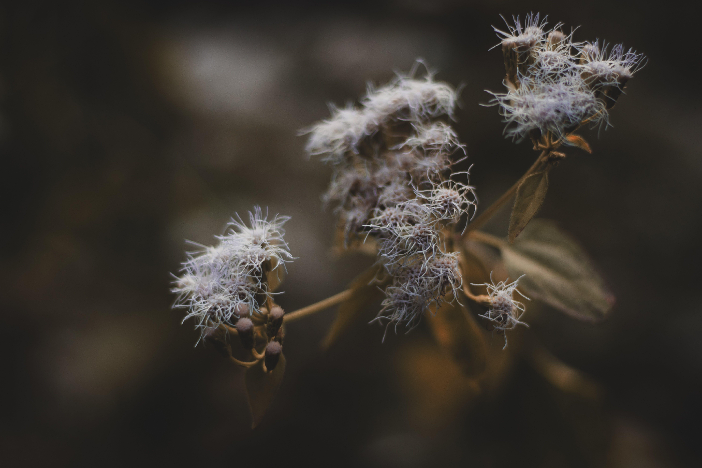 delikatny, dziki, flora