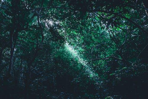 Fotobanka sbezplatnými fotkami na tému les, lesy, prostredie, rastliny