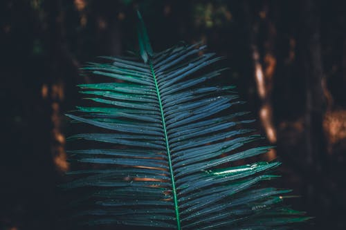 マクロ, 工場, 緑の無料の写真素材