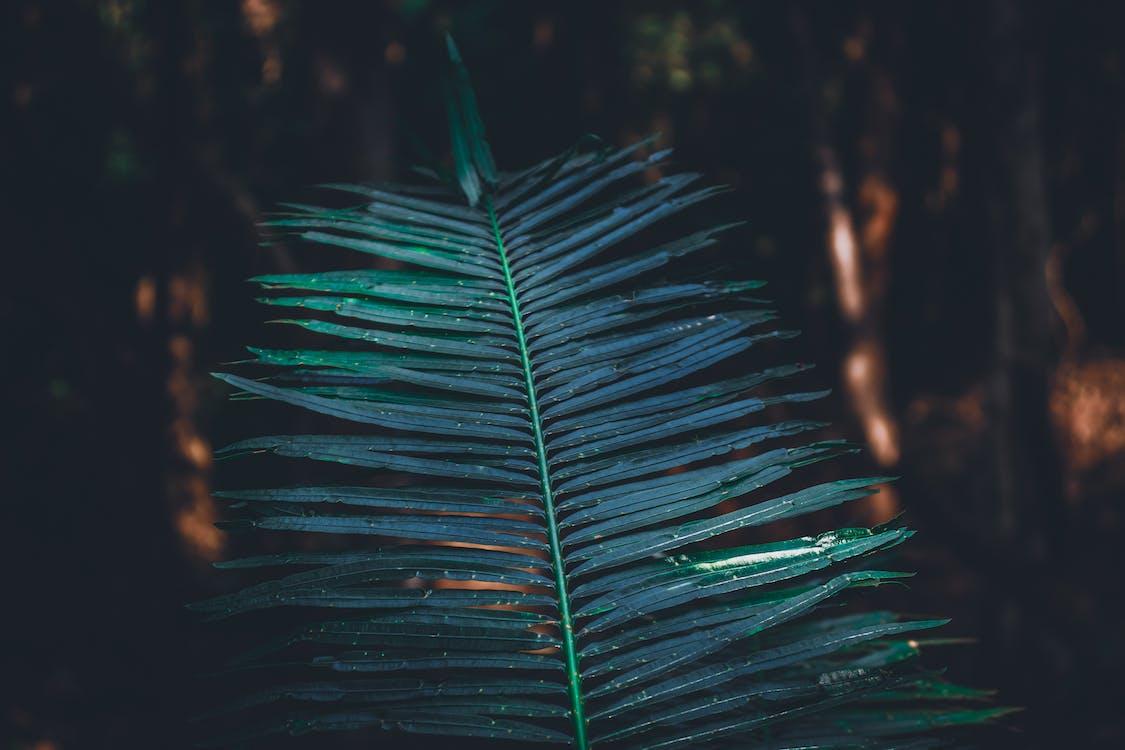 macro, planta, verd
