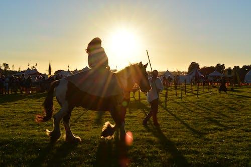 คลังภาพถ่ายฟรี ของ horsefight, กลาง, ทุกเพศทุกวัย, ม้า