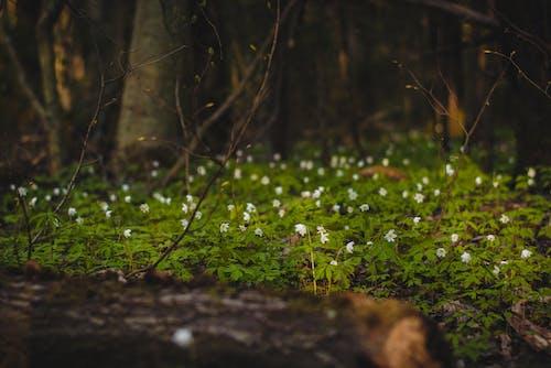 간, 녹색, 땅, 숲의 무료 스톡 사진