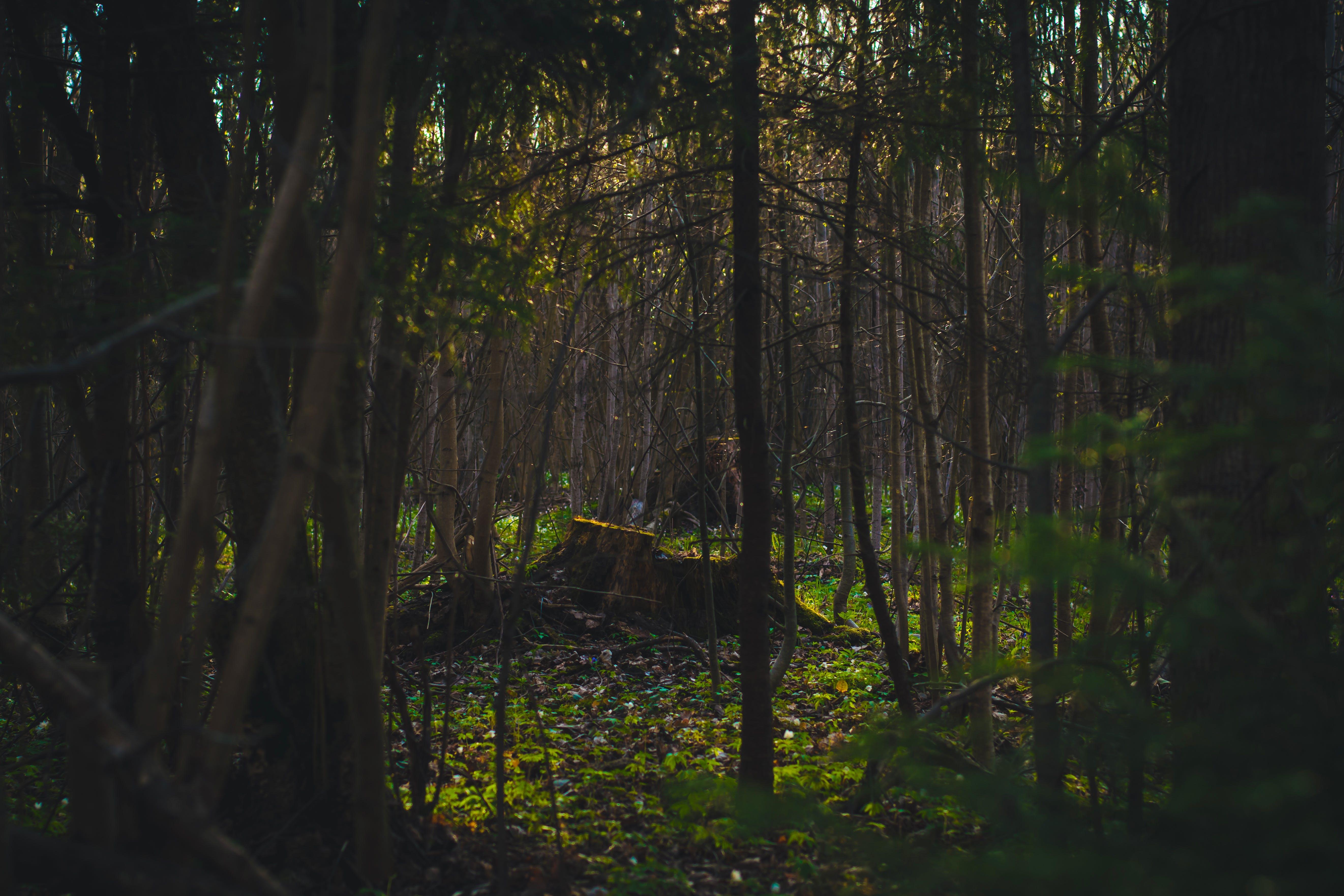 Foto profissional grátis de árvores, floresta, madeiras, meio ambiente