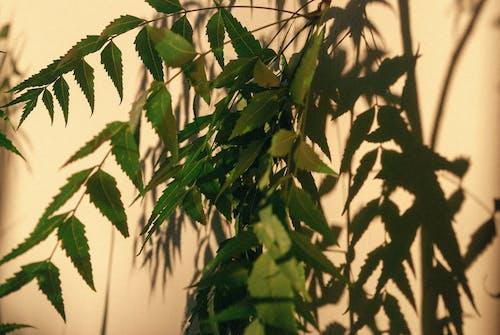 Бесплатное стоковое фото с белый, ветвь, дерево, еда