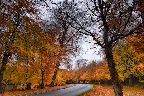 Free stock photo of colors, ireland, wicklow