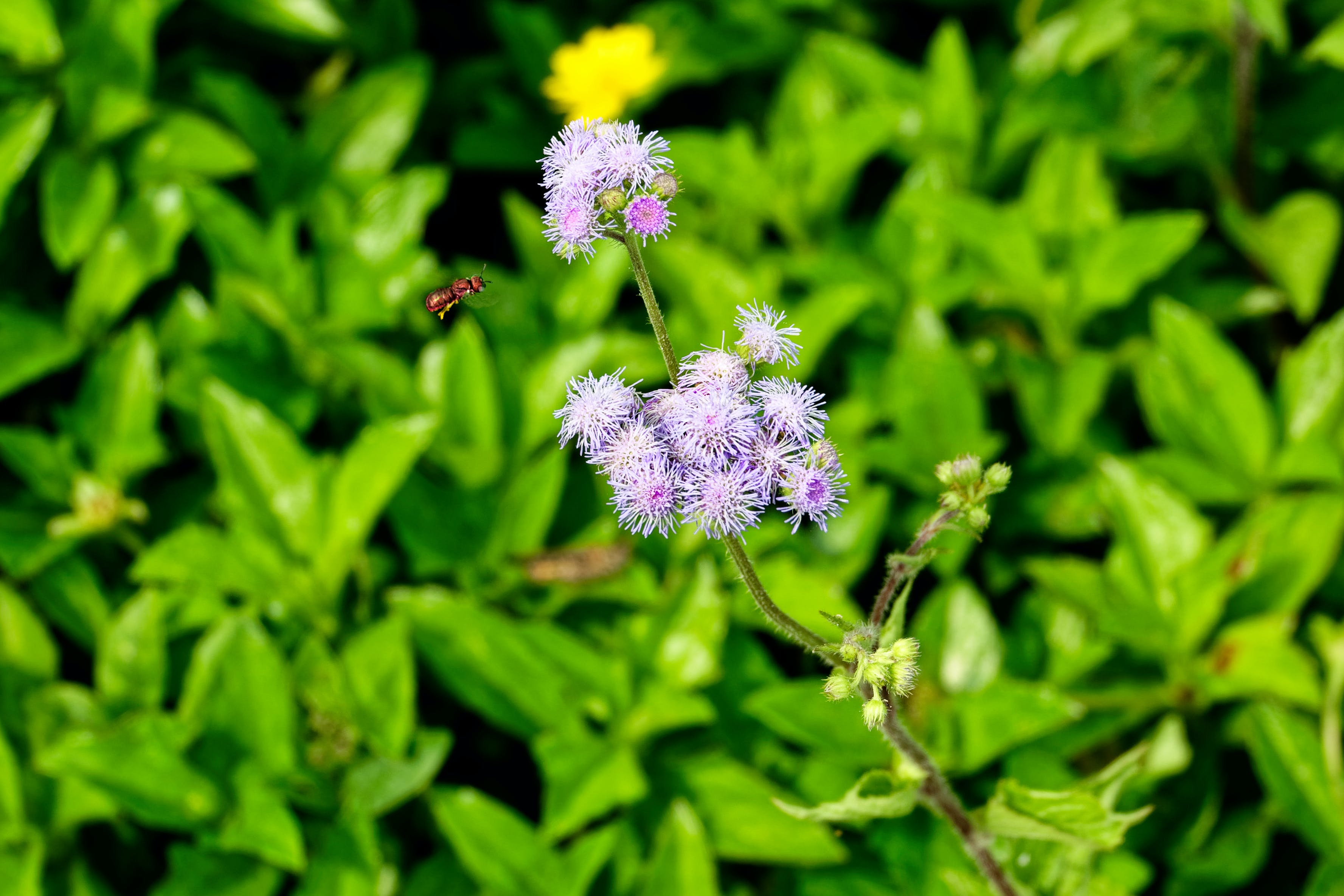 Free stock photo of agriculture, bee, blooming, bright