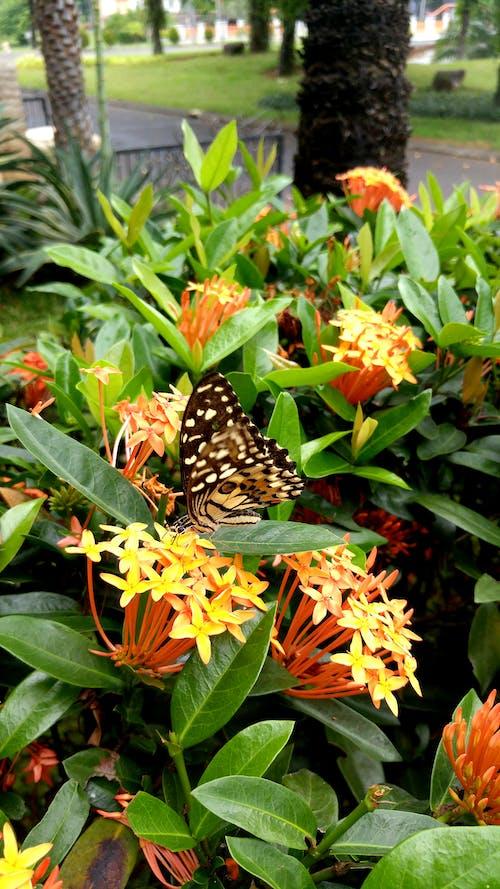#nature #flower #leaf #leaves #butterfly 的 免費圖庫相片