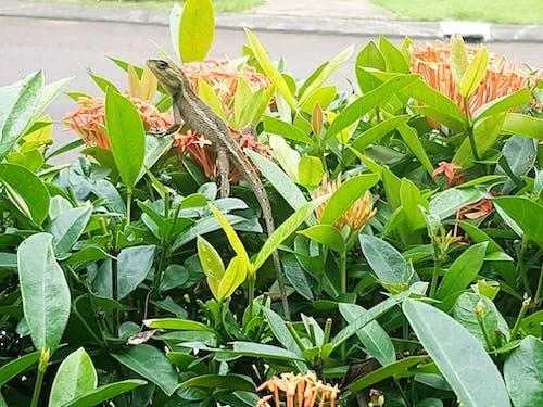 #nature #flower #leaf #leaves #lizard 的 免費圖庫相片
