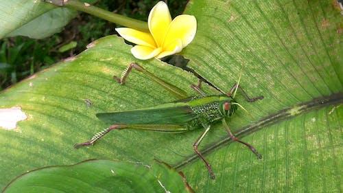 #nature #flower #leaf #leaves #grasshopper 的 免費圖庫相片