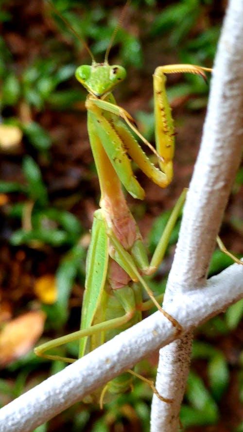 #nature #bug #praying mantis 的 免費圖庫相片