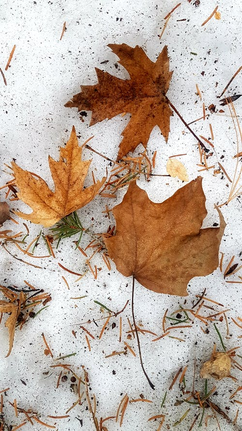 #nature #leaf #leaves #winter #snow 的 免費圖庫相片