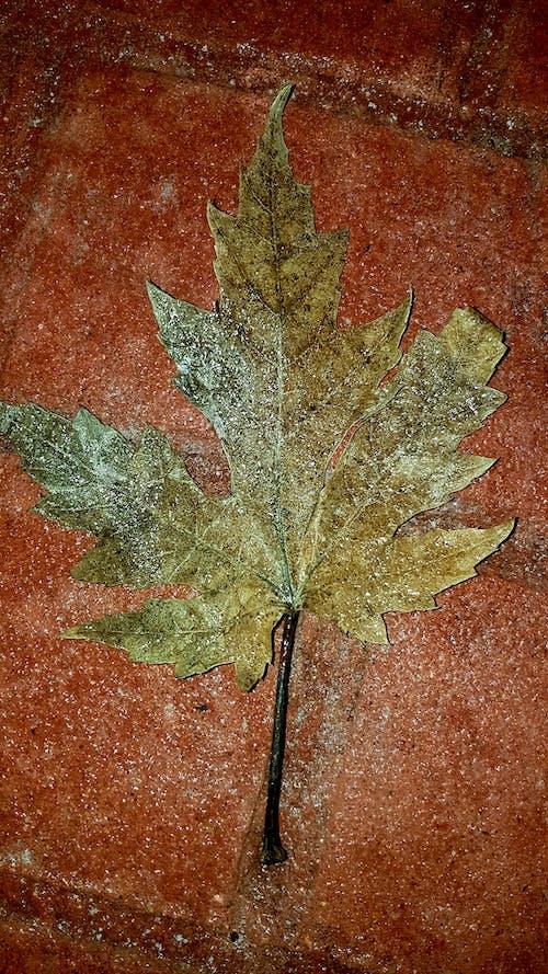 #frost #leaf 的 免費圖庫相片
