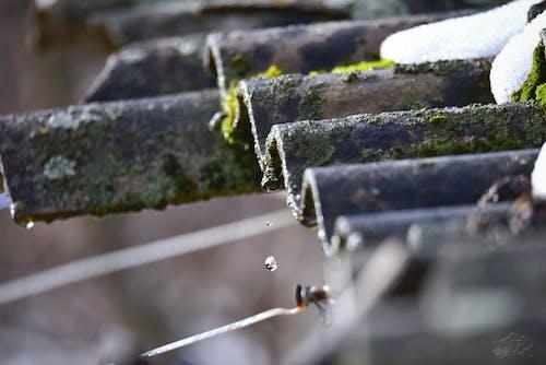 Foto d'estoc gratuïta de bellesa a la natura, constipat, deixar anar, gota d'aigua
