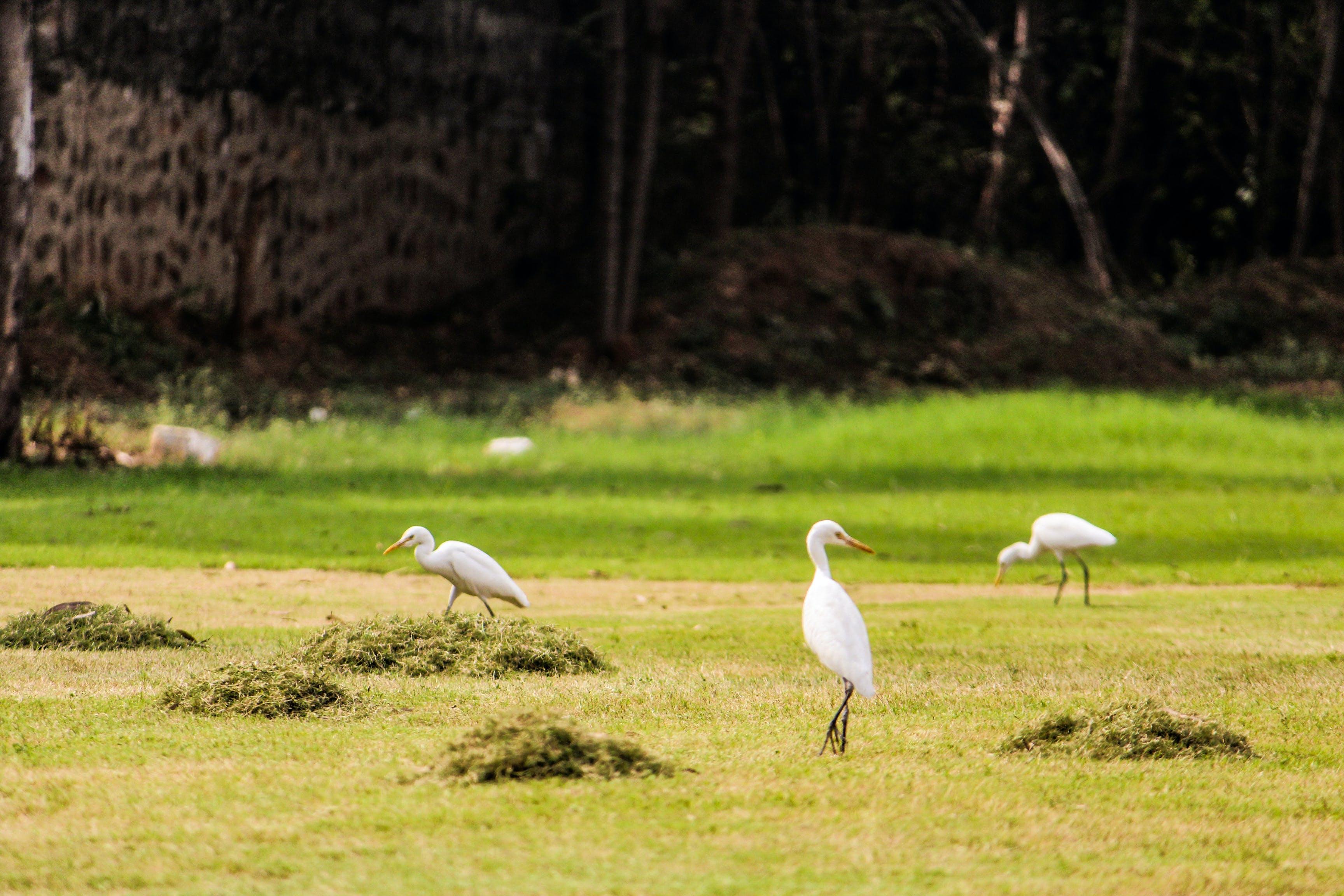 Free stock photo of #outdoorchallenge, beauty in nature, bird, bird feeder