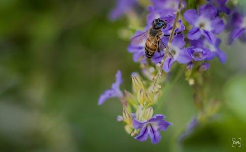 Δωρεάν στοκ φωτογραφιών με μέλισσα