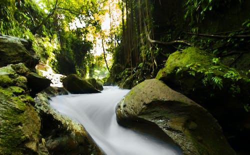 Základová fotografie zdarma na téma dlouhá expozice, džungle, zelená
