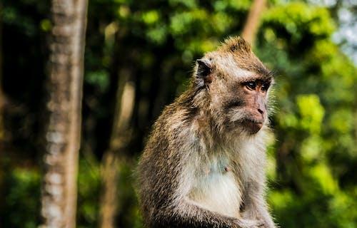 Základová fotografie zdarma na téma dlsr, opice, ostření, zvíře