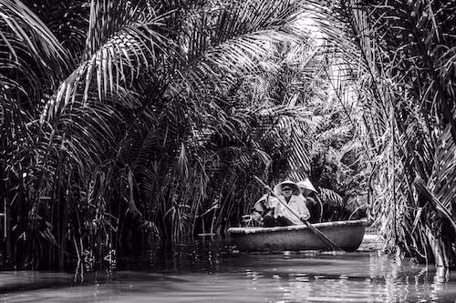 Základová fotografie zdarma na téma aisian, Vietnam