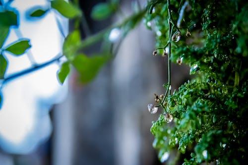 Základová fotografie zdarma na téma rostliny, voda