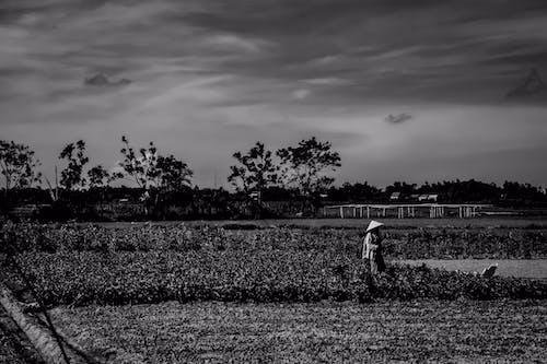 Základová fotografie zdarma na téma asijský, farma