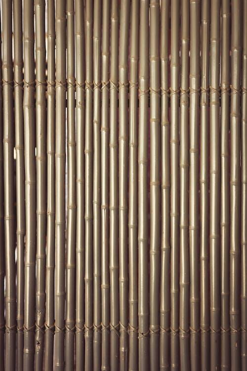 Fotos de stock gratuitas de bambú, cerca, diseño, muro