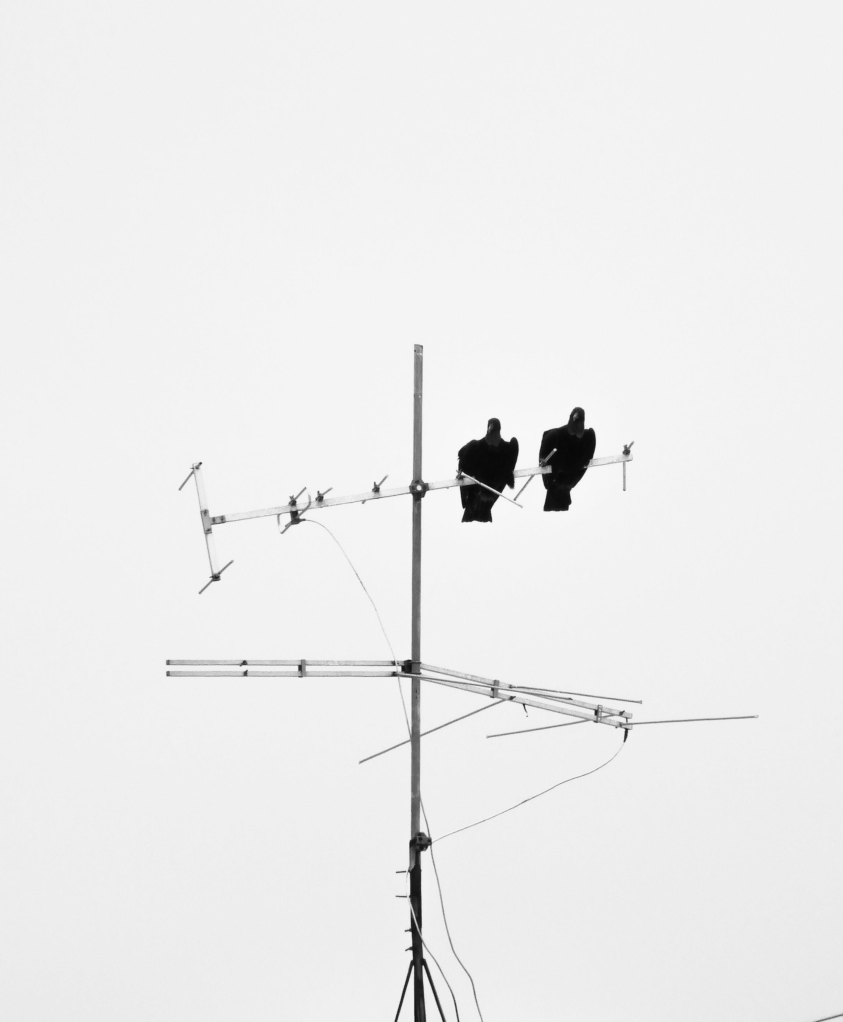 Black Birds Perched on Antenna