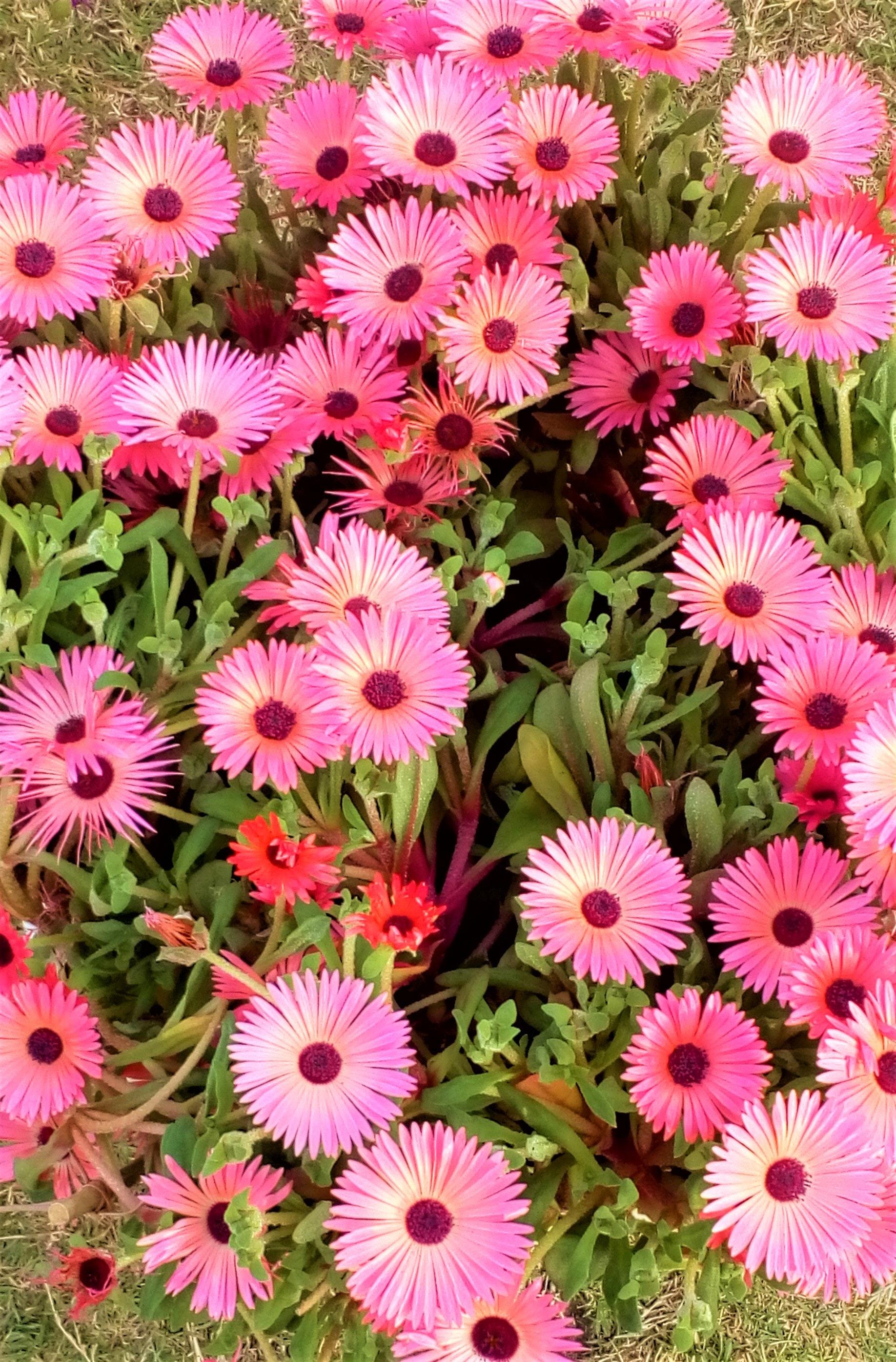 Kostenloses Foto Zum Thema Bluhen Blumen Blumenstrauss
