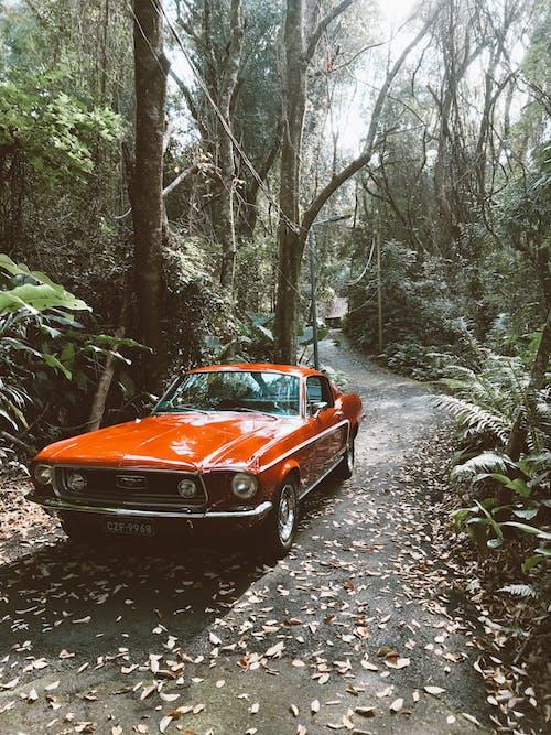 Foto d'estoc gratuïta de arbres, automòbil, bosc, carretera