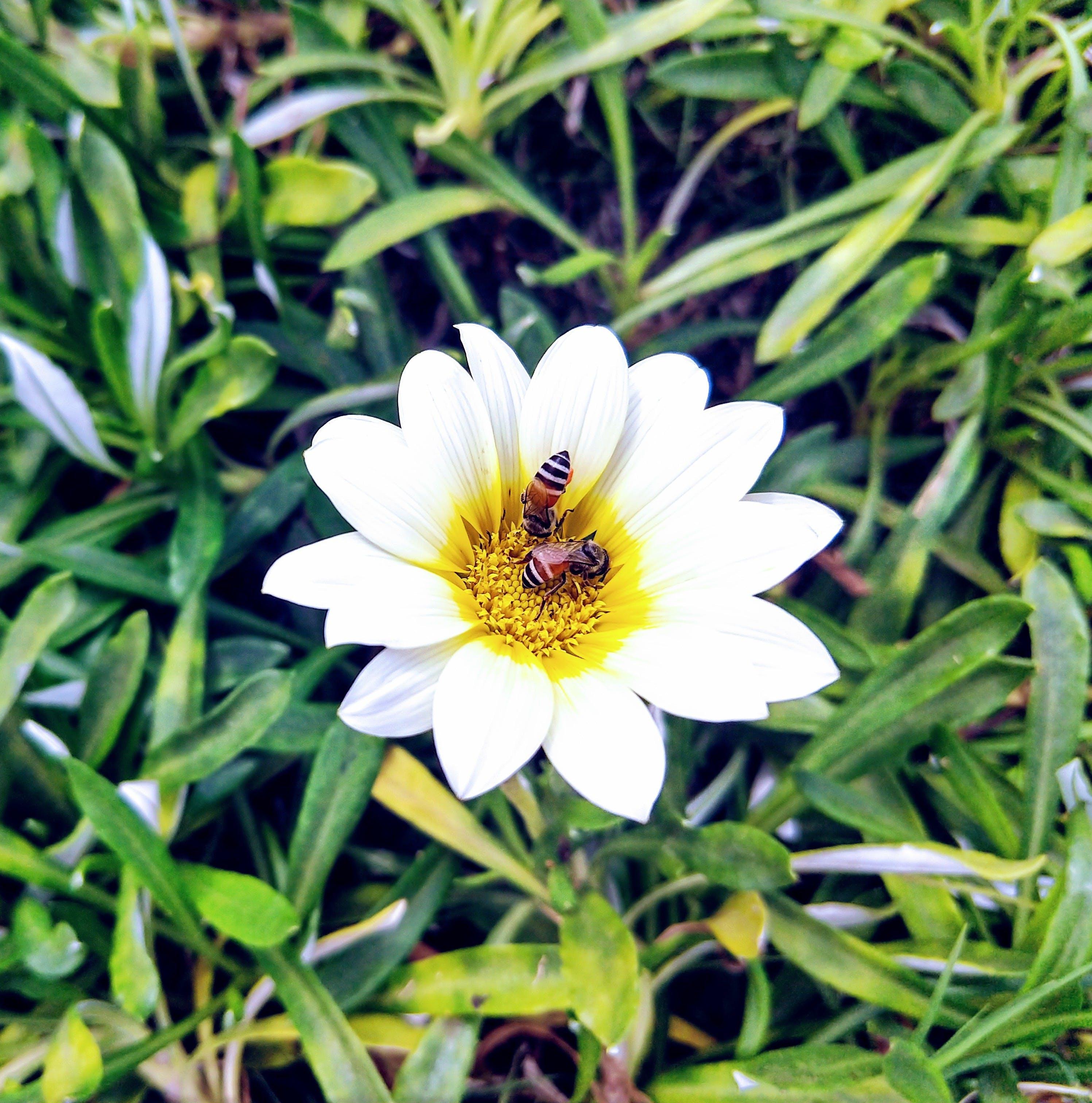 Gratis lagerfoto af smuk blomst