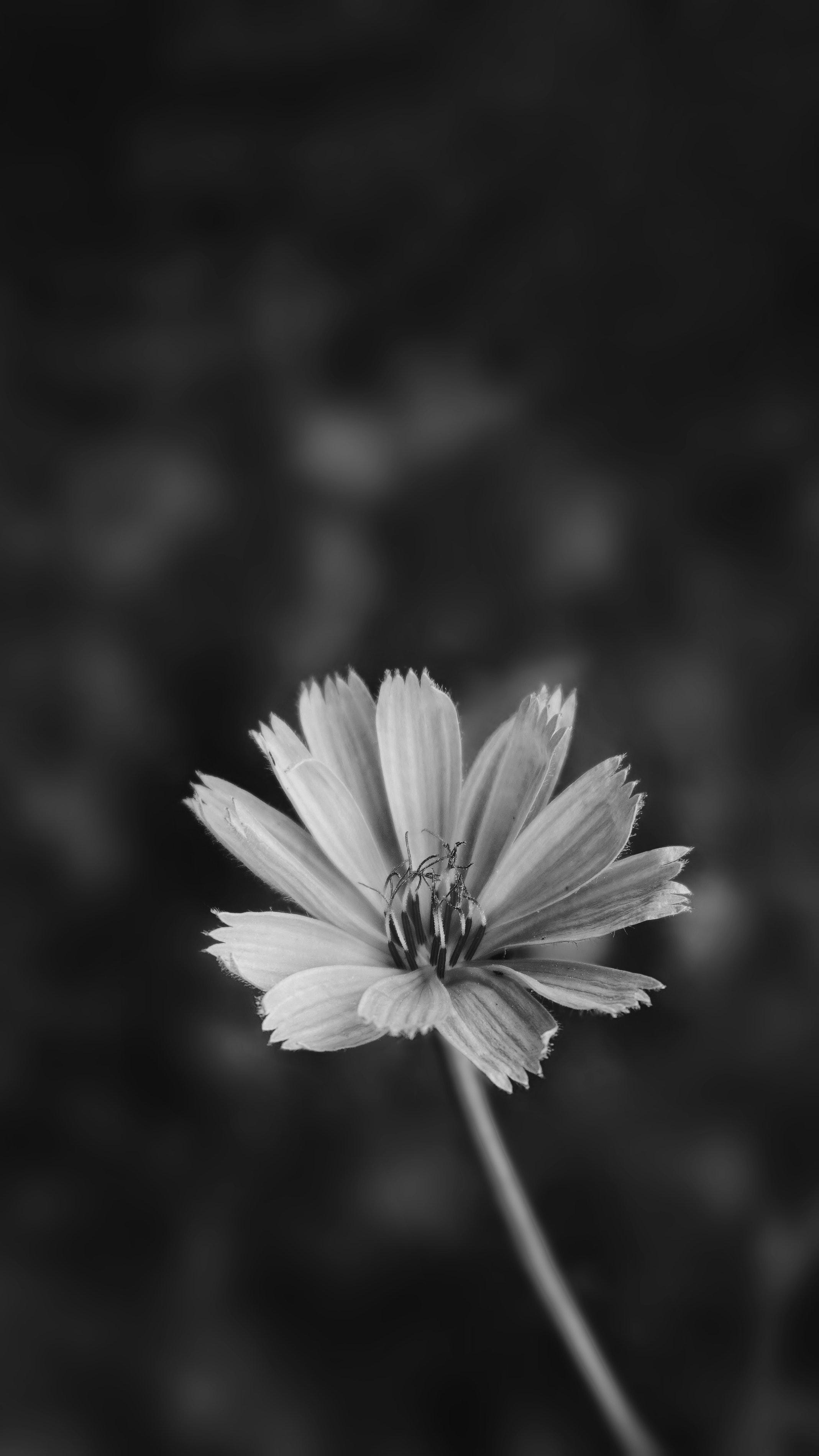 Foto Gratuita Di Bianco E Nero Fiore Sfondo Della Schermata Di Blocco