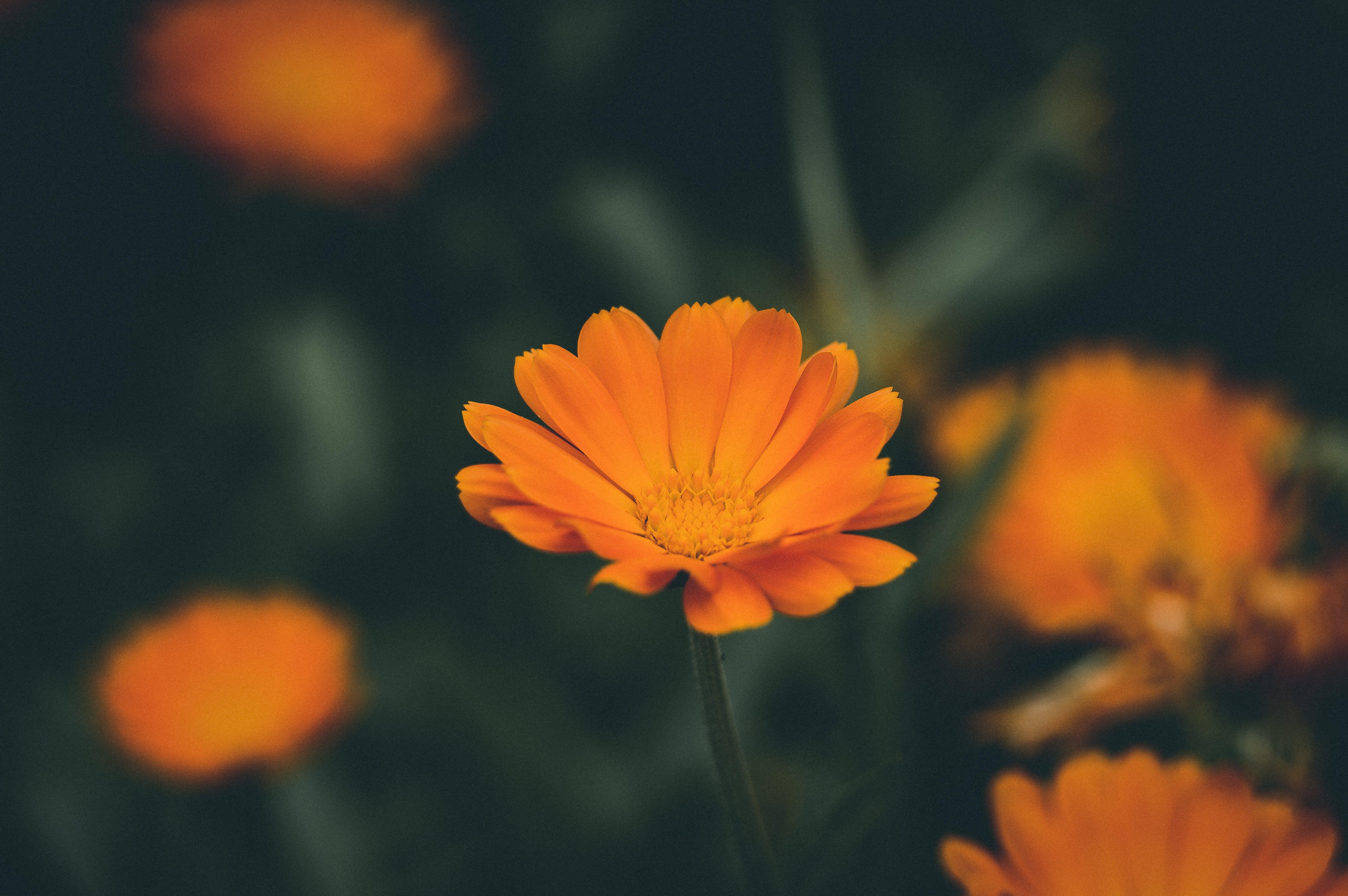 выборочный фокус, красивый, красивый цветок