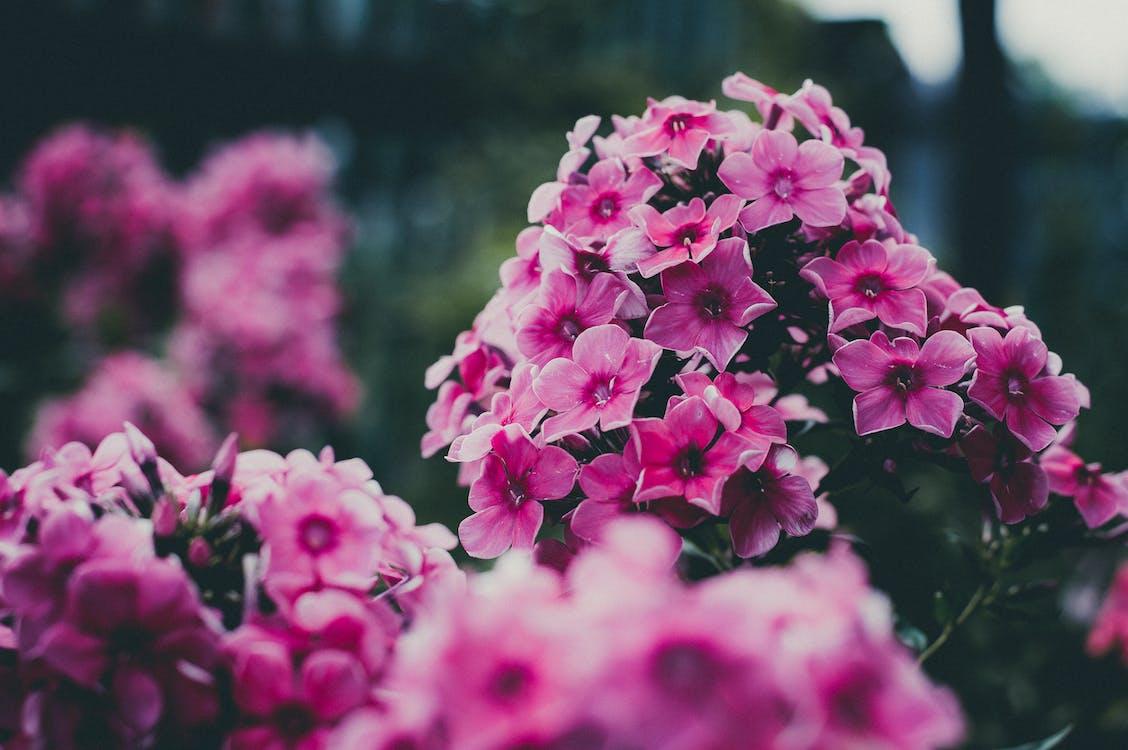 꽃, 꽃무늬, 꽃이 피는