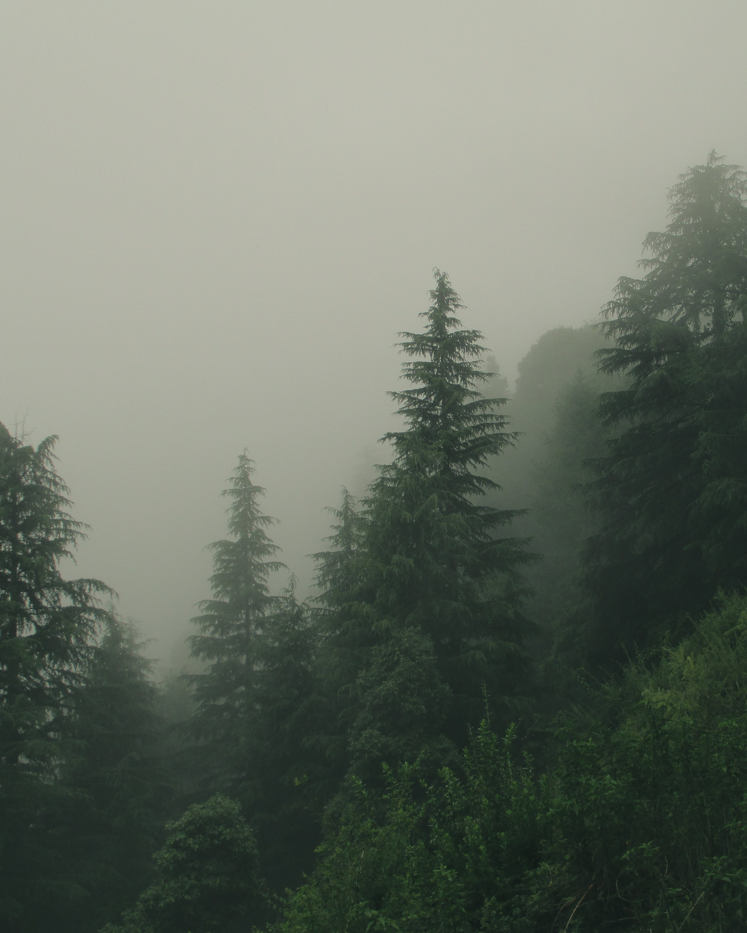 Fotos de stock gratuitas de arboles, bosque, con niebla, escénico