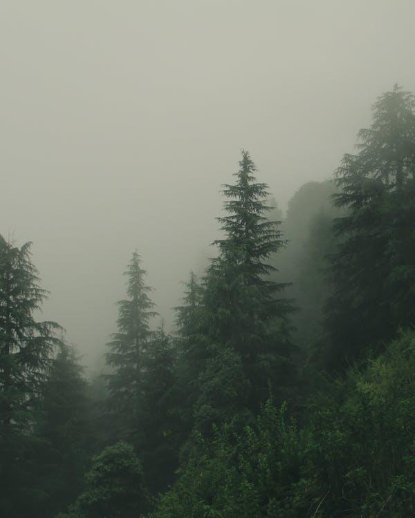 berg, bomen, Bos