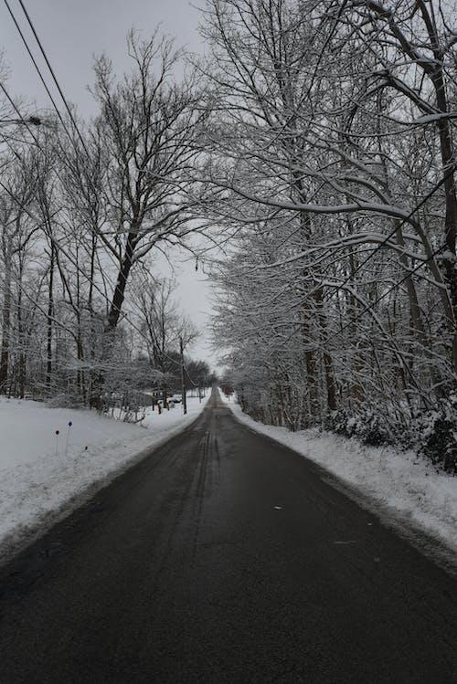 冬天的路, 冬季, 白雪皚皚, 雪路 的 免费素材照片