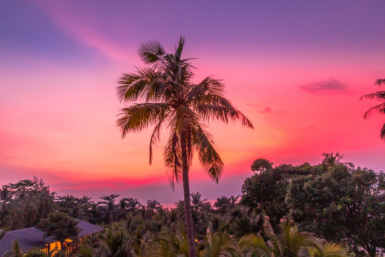 Gratis lagerfoto af farverig, palme, phu quoc, solnedgang