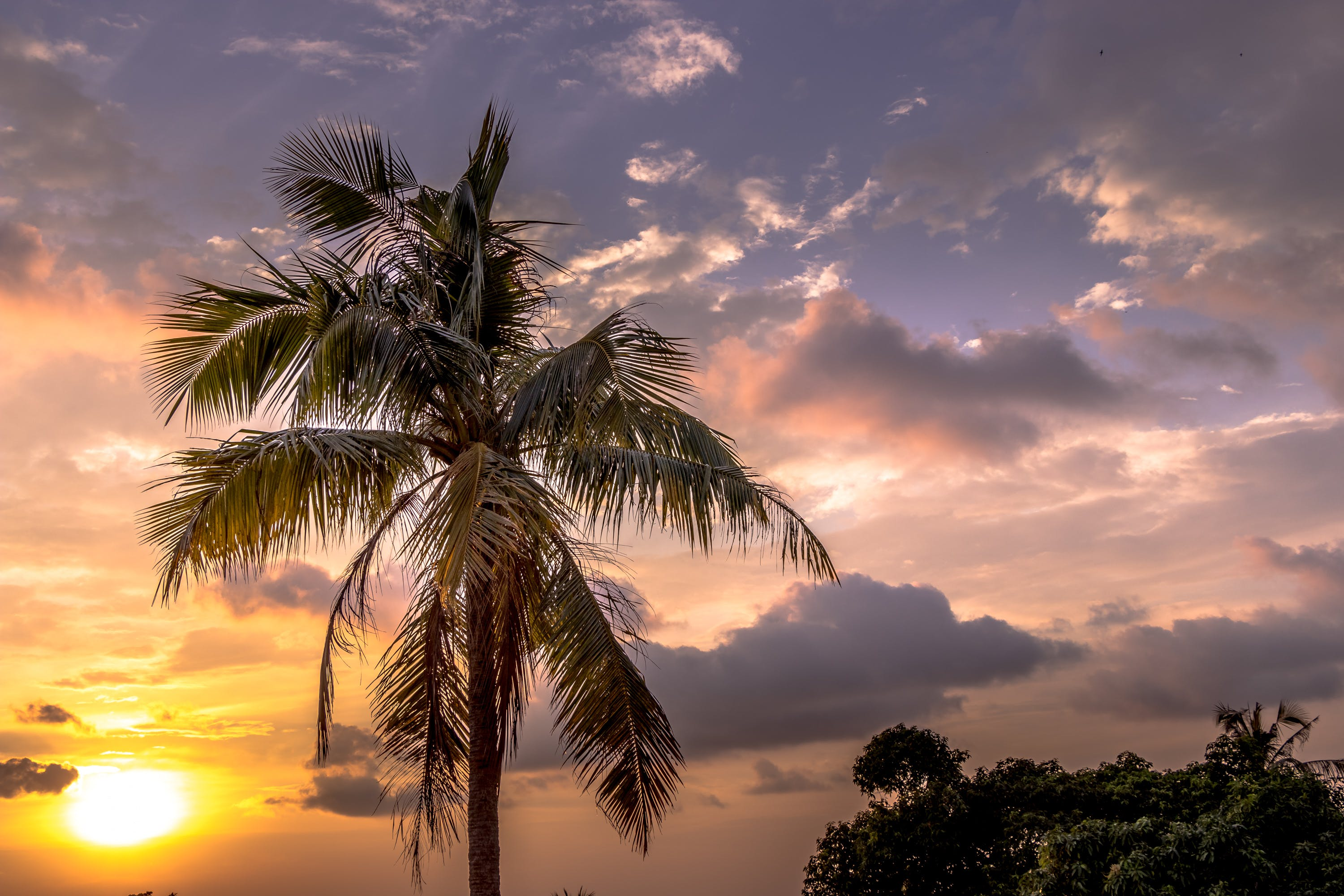 Free stock photo of beautiful, clouds, cloudy sky, palm