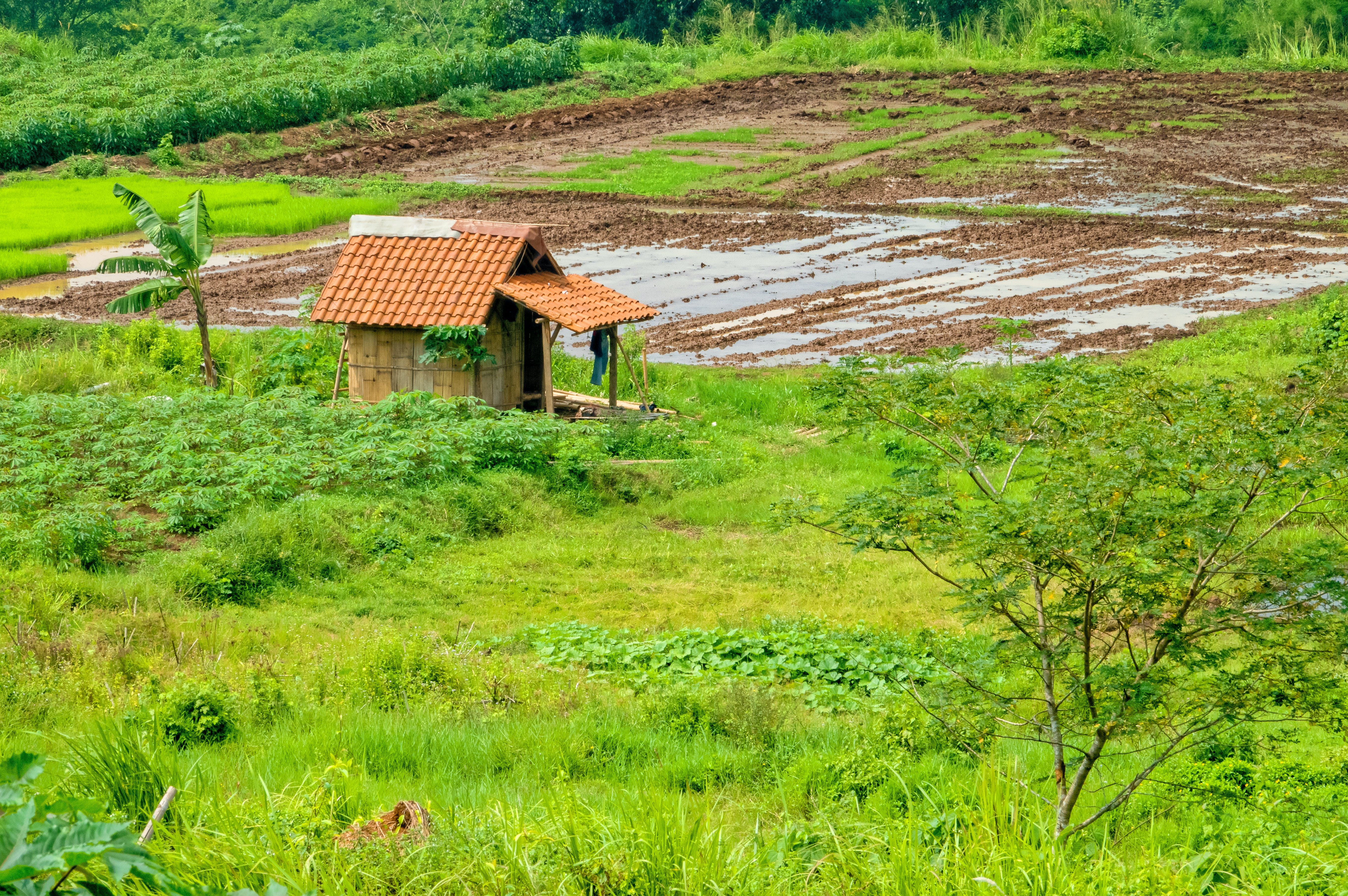 Free stock photo of agriculture, building, country, countryside