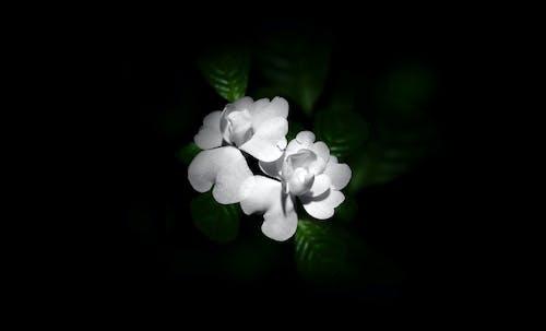 Gratis stockfoto met donker, nacht, nachtfotografie, witte bloem
