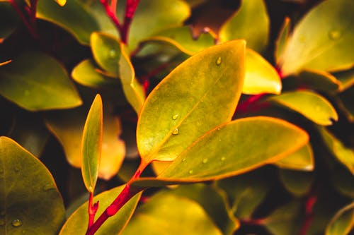 Free stock photo of beauty in nature, droplet, evergreen, focus