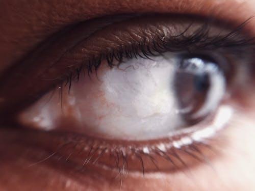 まつげ, まぶた, アーモンドの目, 白の無料の写真素材