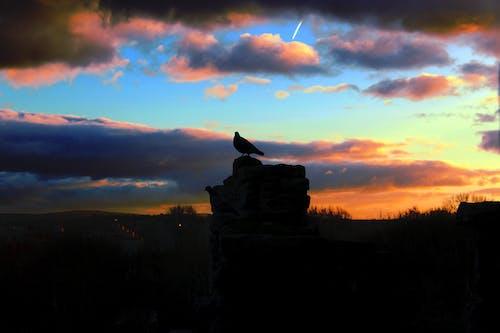 Foto d'estoc gratuïta de castell, colom, escocès històric, fortalesa
