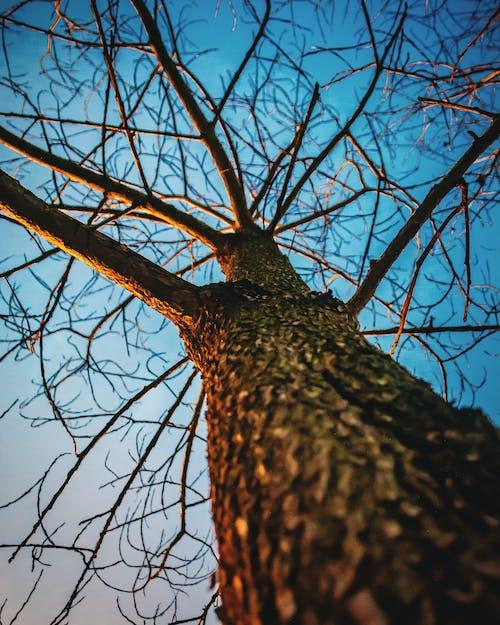 Imagine de stoc gratuită din arbore, arid, cer albastru, vară